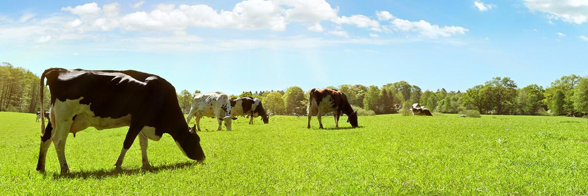 Imagen genérica ganadería
