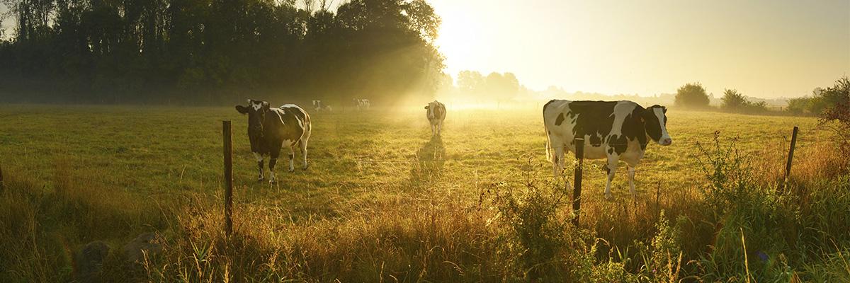 Imagen genérica campo agrícola